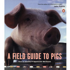 A Field Guide to Pigs (Paperback)