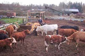 Animal husbandry sector receives 79$US million boost