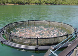 R$ 10 million allocated for shrimp farming in Piauí