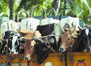 Cattle fodder plant inaugurated in Kerala