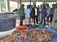 200 Fish farmers trained in feed production