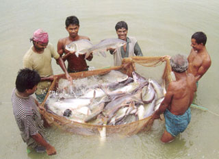 Fisheries and livestock census scheduled for 2014