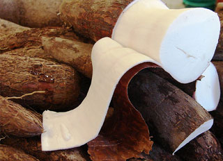 IITA look to position Cassava as a major feed ingredient
