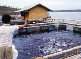 Thai aquaculture industry vows to stop illegal labour