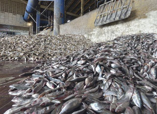 Thai Feed Mill Association agrees to marine protection