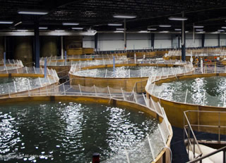 Aquaculture park proposed for Albany, Indiana