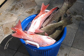 Egypt, the largest aquaculture industry in Africa