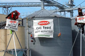 Genetically modified animal feed study results due mid-2010