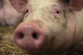 Dioxin crisis report urges reforms for animal feed safety