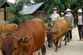 Vietnamese animal husbandry and poultry sectors to be restructured
