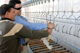 Al Kanz poultry processing plant reopens