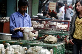 Indian poultry prices decline on cheaper feed