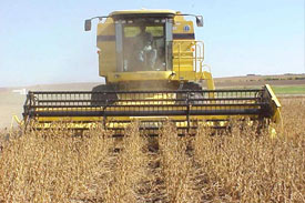 Soybeans Rise on Record Use for Feed, Cooking Oil; Corn Falls