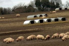 Excessive dioxins found in European feeds