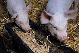 UK animal feed industry to 'benefit' from new guidelines