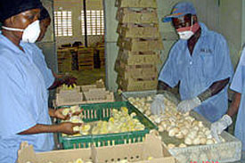High cost of inputs dealing blow to poultry farming