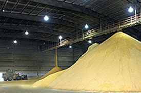 Poultry feed output sustained in Brazil