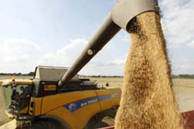Russia will need to import feed grains