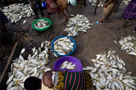 USAID funded project increases fish yield in Nigeria