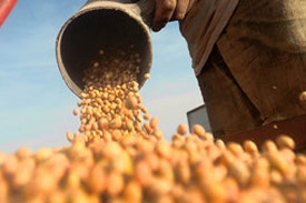 Feed millers: US may export more soybeans to PHL