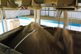 Tassal's tests feed compare feeds with fishmeal